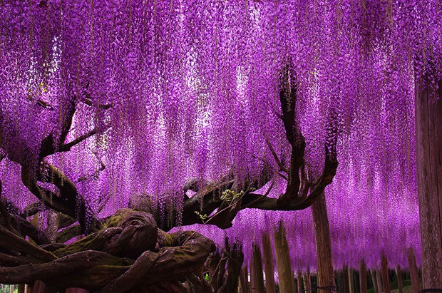 16 árvores mais lindas do mundo (Foto: reprodução)