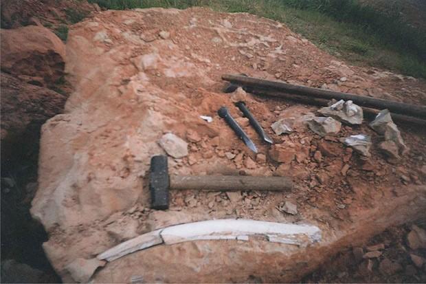 Imagem mostra costela encontrada junto aos materiais da nova espécie de dinossauro. (Foto: William Nava/Divulgação)