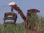 Centro-sul do país colhe 518 milhões de toneladas de cana-de-açúcar