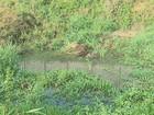 Vazamento de esgoto incomoda os moradores de Rincão, SP, há 20 anos
