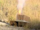 Produção de fogos de artifício em MG tem histórico de mortes