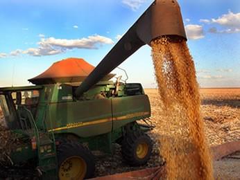 Milho encerrou janeiro como produto mais exportado por Mato Grosso. (Foto: Edson Rodrigues/Secom-MT)