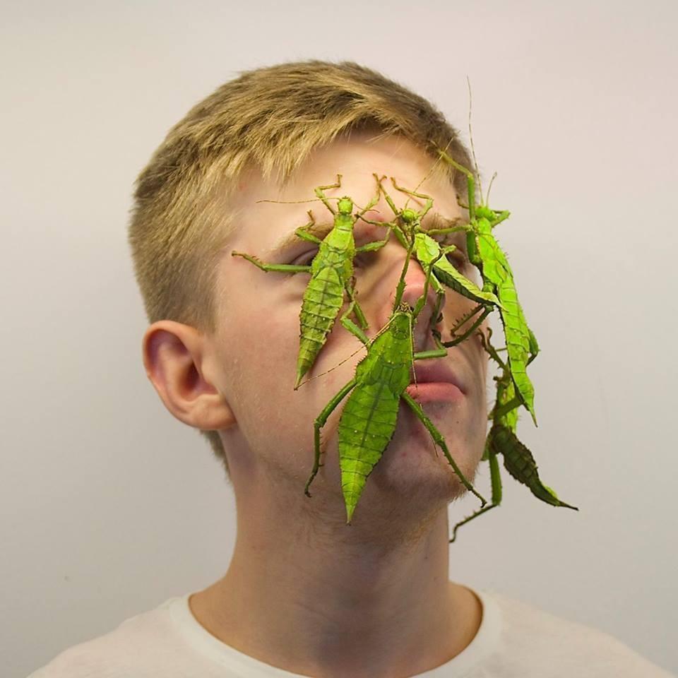 (Foto: Reprodução/Facebook/Insecthaus)