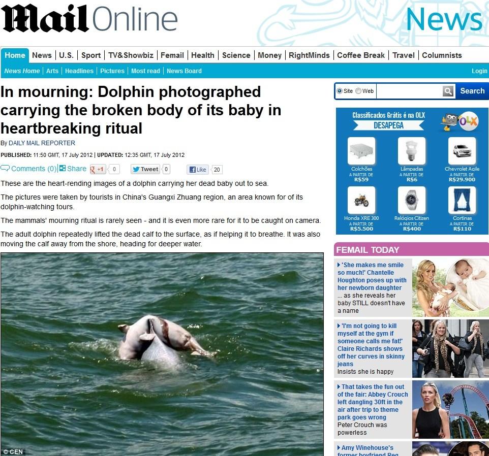 Golfinho (Foto: Daily Mail/Reprodução)