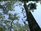 Bombeiros buscam universitária perdida na Flona do Tapajós, no PA