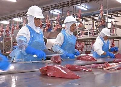 tv-carne-expotacao-MS-EUA (Foto: Reprodução)
