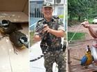 PM resgata animais silvestres na zona urbana de 3 cidades do sul de Goiás