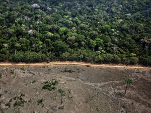 Greenpeace documenta área de desmatamento no município de Lábrea no sul do Amazonas (Foto: Greenpeace / Marizilda Cruppe)