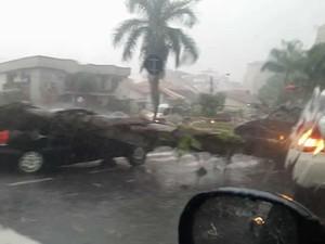 Chuva forte derruba árvore na Rua 41 (Foto: Arquivo Pessoal/ Wagner Lanes)