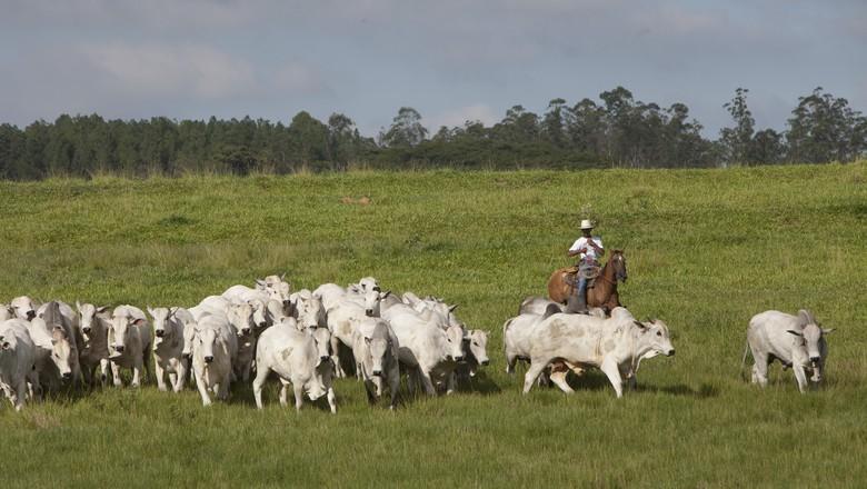 bovinocultura_de_corte_fazenda_sustentável  (Foto: Marcelo Min )