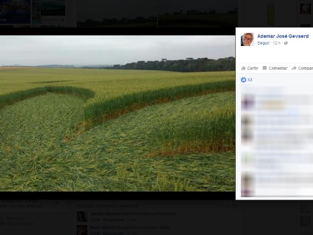 Gevaerd postou foto das imagens que recebeu da figura na lavoura (Foto: Reprodução/Facebook)
