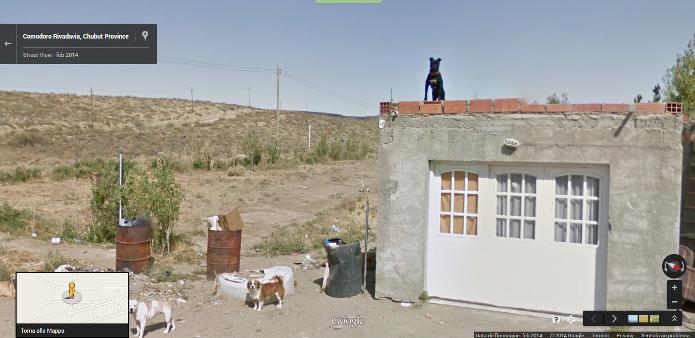 O cão em cima da laje da casa foi flagrado pelo serviço de mapa do Google (Foto: Reprodução/Lívia Dâmaso)