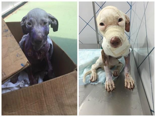 Vida foi resgatada com parte da pele dilacerada em novembro deste ano (Foto: Joana Darc Cordeiro/Arquivo Pessoal)