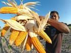 Pequenos agricultores receberão doação de sementes de vários grãos