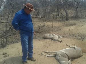 Fazendeiro observa animais mortos em alojamento (Foto: Sérgio Fogaça/Inter TV Cabugi)