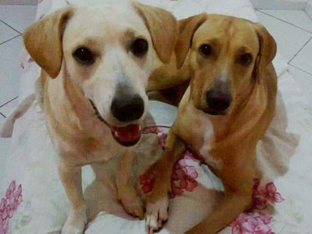 Donos de cães suspeitam que os animais foram envenenados (Foto: Paulo Sérgio/Arquivo Pessoal)