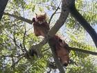 Onça que subiu em árvore é resgatada em Barbacena