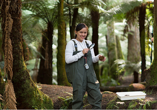 nova-zelandia-curso (Foto: Reprodução site Nova Zelândia)