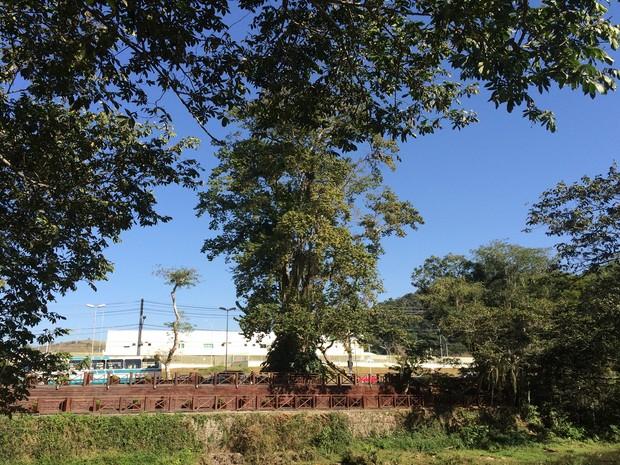 Vista do Pau D'Alho, ponto turístico de Guararema (Foto: Cristina Requena/G1)