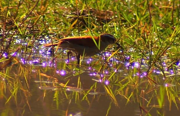 Reserva é um verdadeiro paraíso para diversas espécies de pássaros (Foto: Reprodução/TV Anhanguera)