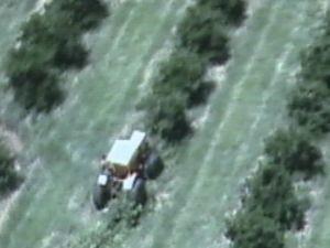 Na primeira invasão, milhares de pés de laranja foram derrubados  (Foto: reprodução/TV Tem)