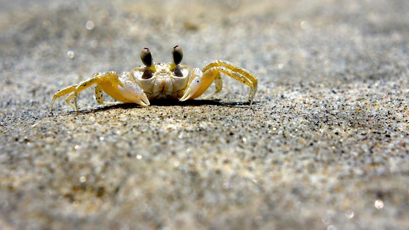 Caranguejo em Itamanbuca (Foto: LDG1976 / Shutterstock)