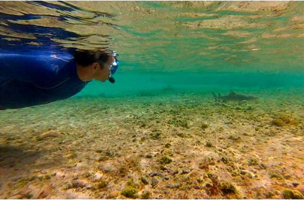 Repórter Eduardo Lacerda mergulha na Piscina do Atalaia e avista tubarão (Foto: Reprodução EPTV)