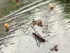 Três municípios de MT estão em situação de risco de surto de dengue