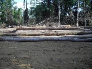 Imagens mostram área desmatada em Rondon do Pará (Foto: Divulgação/Ibama)