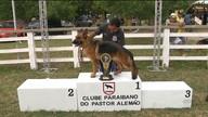 Campeonato Brasileiro de Cães da Raça Pastor Alemão é realizado em CG