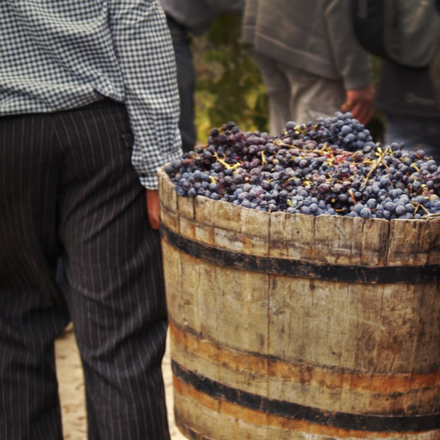 Vinho orgânico (Foto: Thinkstock)