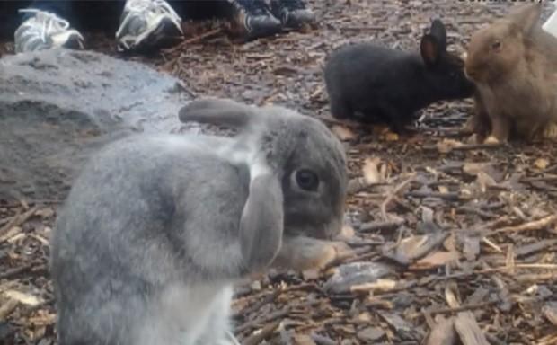 Os animais eram mantidos em casa sem limpeza adequada, e não recebiam os cuidados necessários (Foto: Reprodução)
