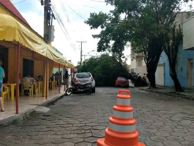 Uma árvore caiu durante uma chuva com vento nesta quarta-feira (5), em Cuiabá, e atingiu um veículo que estava estacionado na Rua São Joaquim, região central da capital. Após a queda, a via ficou bloqueada e o trânsito foi controlado por agentes da Secretaria Municipal de Trânsito e Transporte Urbano (SMTU), até a retirada da árvore. (Foto: Thaiza Assunção/ Arquivo pessoal)