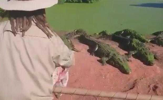 Cena aconteceu quando tratador alimentava crocodilos (Foto: Reprodução/Facebook/Fortafy)