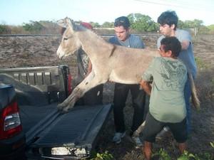Animal foi resgatado e levado para uma fazenda (Foto: André Veras)