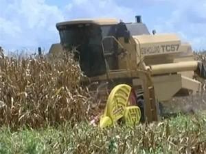 Técnica na produção de milho aumenta produção em Piumhi (Foto: Reprodução/TV Integração)