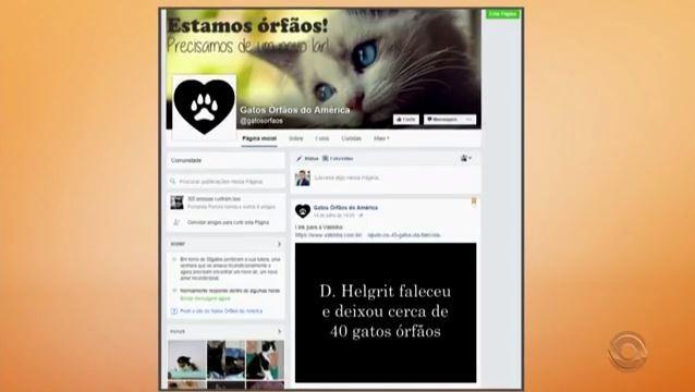 Campanha nas redes sociais busca lar para gatos (Foto: Reprodução/RBS TV)