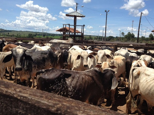 Fazendeiro de Goiás foi preso com 192 cabeças de gado furtadas de fazendas de Mato Grosso (Foto: Assessoria/Polícia Civil de MT)