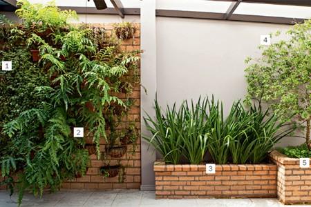 A parede próxima à churrasqueira recebeu o jardim vertical com peperômias (1) e samambaias (2). Na sequência, jardineiras com falso-íris (3), jabuticabeira  (4) e grama-amendoim (5) (Foto: Edu Castello)