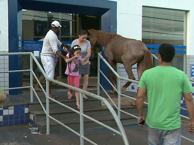 Cavalo tenta entrar em agência da CEF em Ribeirão Preto, SP (Foto: Márcio Meirelles/EPTV)