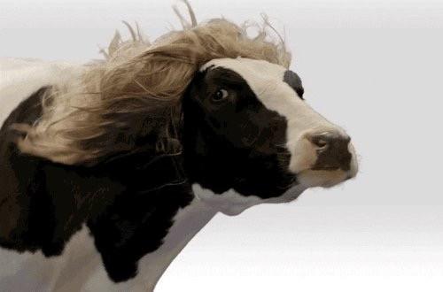 Vaca (Foto: Reprodução)