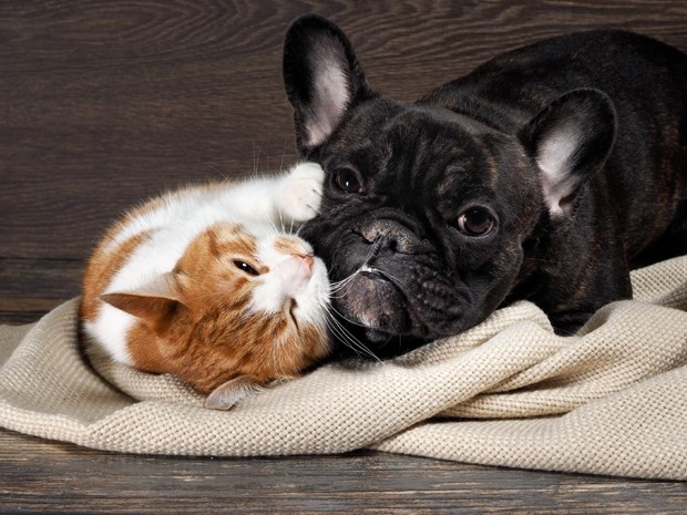 Funny cat and dog lying on the floor, playing hugging each other (Foto: Getty Images/iStockphoto)