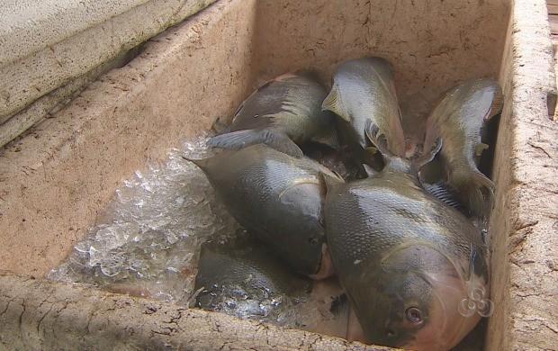 Durante o período fica liberada a cota de dez quilos diários por família para a subsistência (Foto: Bom Dia Amazônia)