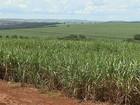 Brasil será maior exportador agrícola mundial em 2024, dizem OCDE e FAO