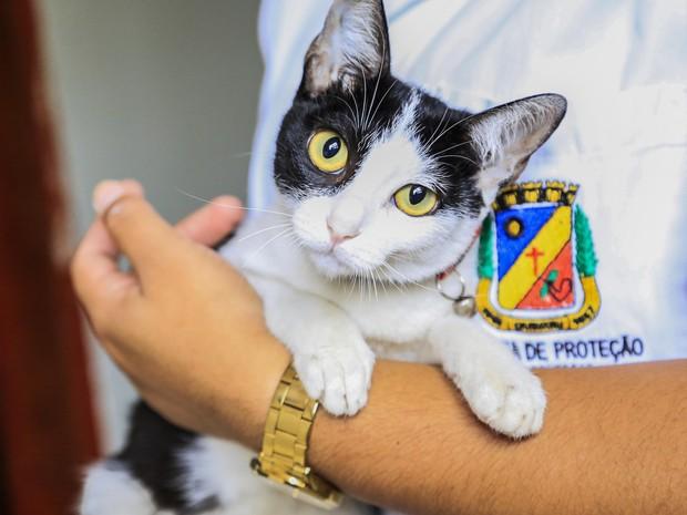 Animais disponibilizados para adoção em Caruaru estão vacinados e vermifugados (Foto: Rafael Lima / Secom Caruaru)