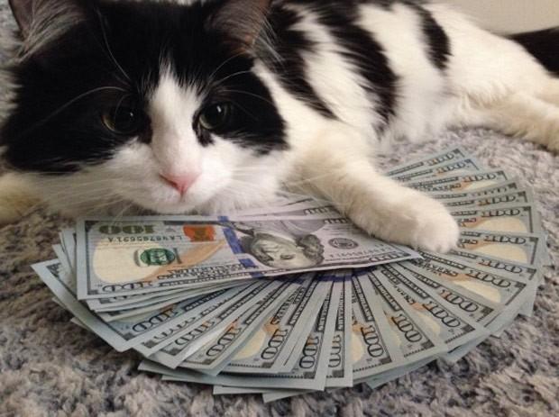 Gato posou com dezenas de cédulas de US$ 100 e vira hit na web (Foto: Reprodução/Imgur/Essind)