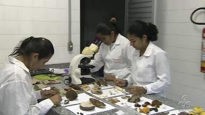 Cogumelos da Amazônia são estudados por pesquisadores do INPA (Foto: Bom dia Amazônia)