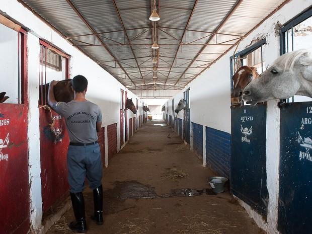 Cavalaria da PM contava com 27 animais e ganhou mais cinco. (Foto: Maria Anffe/GcomMT)