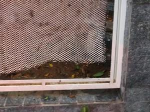 Portão da casa foi danificado na ação (Foto: Arquivo Pessoal)