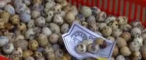 Criadora comemora aumento na venda dos ovos de codorna; assista as matérias na íntegra (Reprodução / TV Diário)